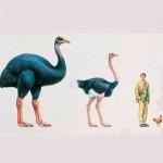 Peut-on ressusciter les espèces d'oiseaux disparues ?