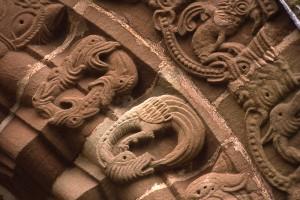 Santé et trouble alimentaire chez les reptiles : l'Ouroboros, serpent qui se mord la queue (causes, symptômes, solution)