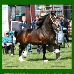 """Concours d'élevage équestre """"Normandie Welsh Summer Show 2013"""" à Bois Guillaume(76), le dimanche 23 juin 2013"""
