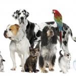 Les maladies transmissibles par nos animaux (zoonoses) peuvent-elles être évitées ?