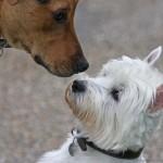 Education et comportement : les 10 règles de base lors de l'arrivée d'un second chien