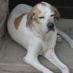 Comportement et santé : l'insomnie chez les chiens âgés