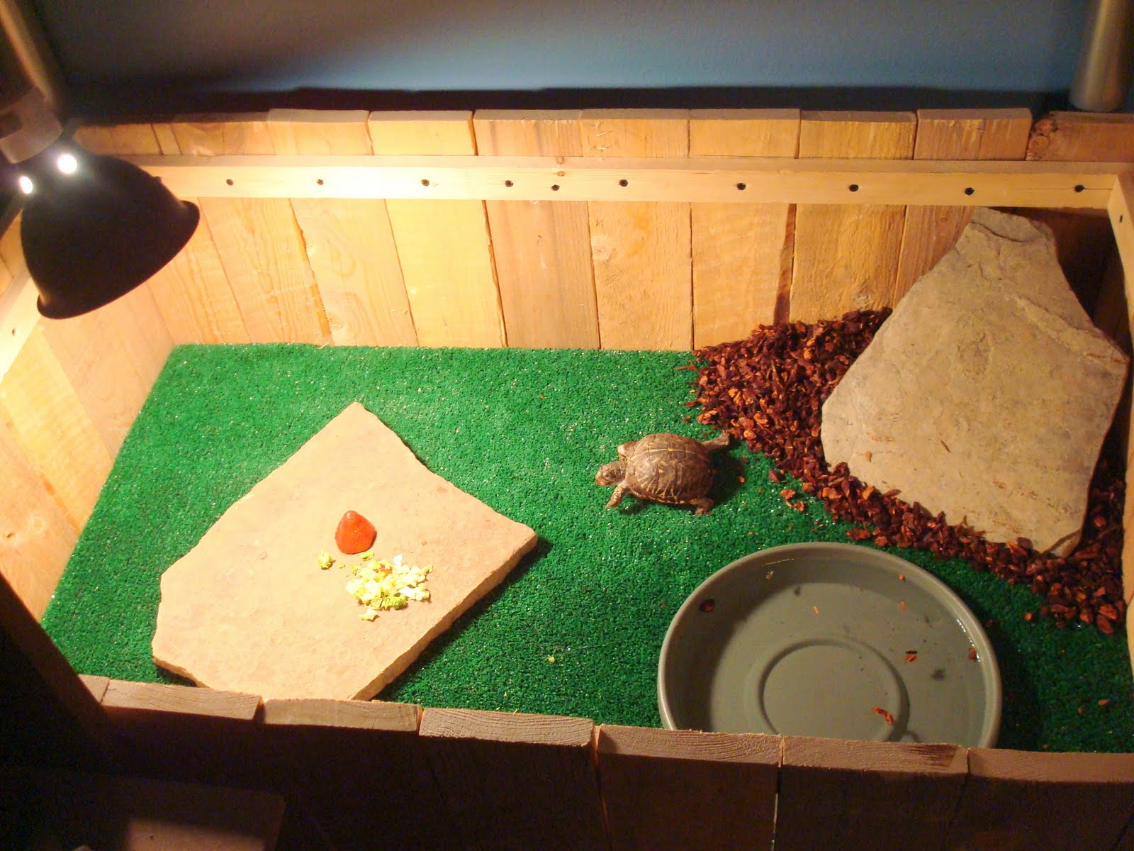 tortues terrestres espèces