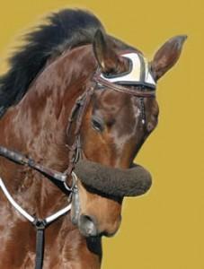 Le Trotteur français, un cheval polyvalent