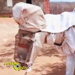 Boneco, l'âne apiculteur