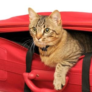 Les secrets d'un été en toute sécurité avec nos chiens et chats