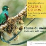 """Exposition de photographies """"Faune du Monde"""" à Orléans (45), du vendredi 07 juin au dimanche 11 août 2013"""