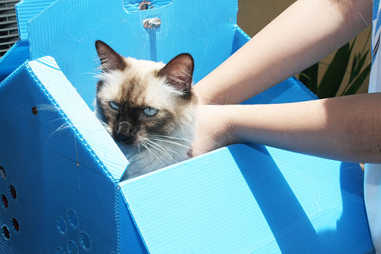 Santé : les premiers secours en cas de blessure chez le chat