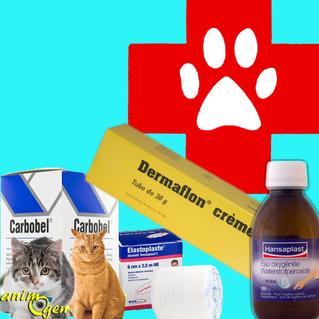 Santé : trousse à pharmacie de premiers soins pour le chat