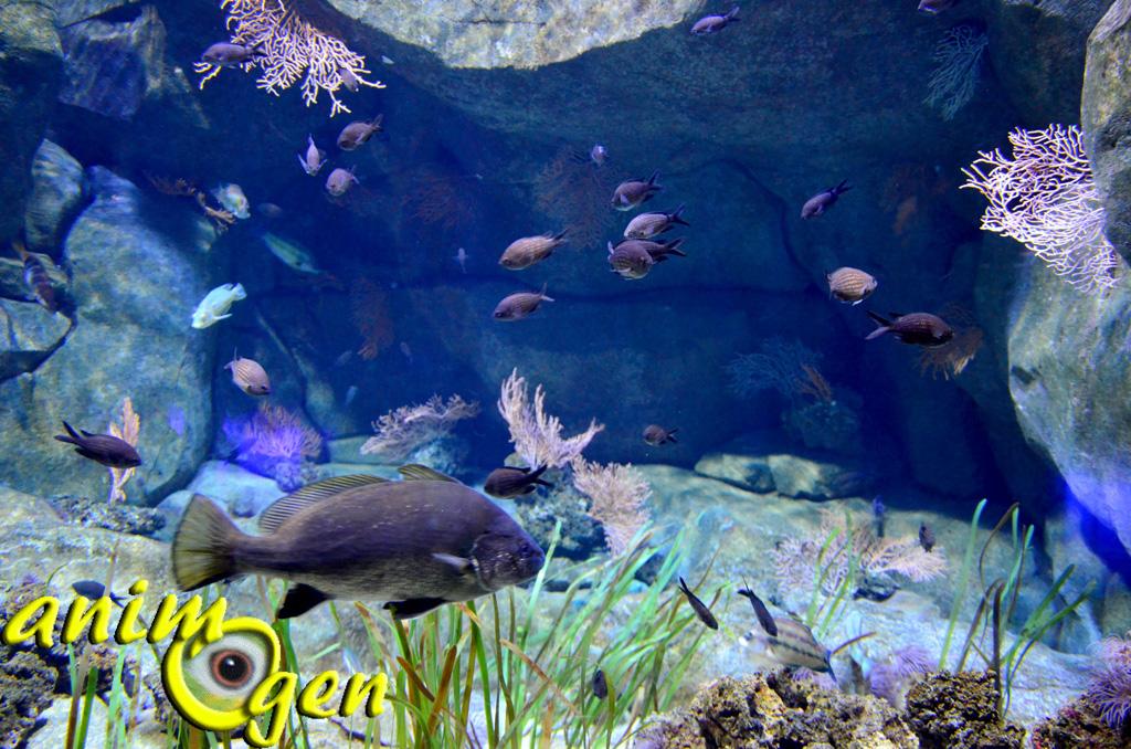 parc animalier aquatique l aquarium du trocad 233 ro animogen
