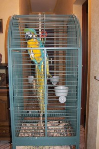 Accessoire : les cages pour perroquets (forme, dimensions, matière)