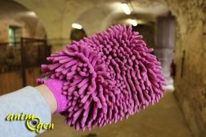 Pansage du cheval : brosses, cure-pied et autres accessoires indispensables