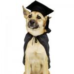 La science conteste les principes d'éducation canine basés sur les rapports de dominance
