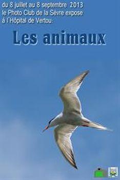 Exposition les animaux vertou 44 du lundi 08 for Horaires piscine vertou