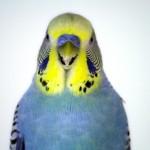 Exposition-vente d'oiseaux à Chazé-sur-Argos (49), dimanche 07 juillet 2013
