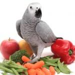 Alimentation : les légumes de nos perroquets ont-ils les mêmes vertus crus ou cuits ?