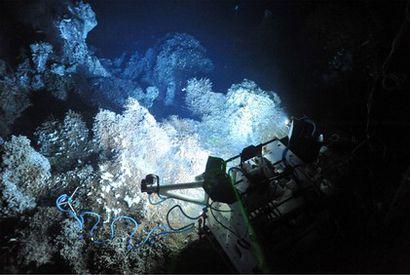 Plongez dans les grands fonds marins avec l'Ifremer