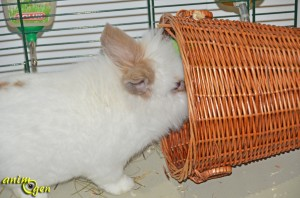 Jouet pour lapin, chinchilla et cochon d'Inde à fabriquer soi-même : panier de foraging