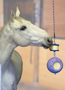 Jouets : comment distraire chevaux, ânes et poneys en notre absence ?