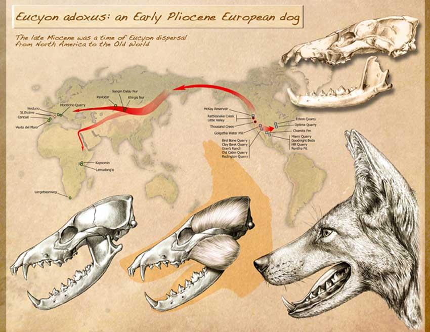 Les premiers chiens de compagnie étaient-ils belges ?