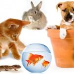 Quel est le moment idéal pour adopter un animal de compagnie supplémentaire ?