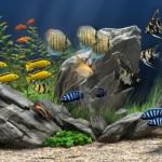 Quelles pierres et autres minéraux naturels choisir pour décorer un aquarium d'eau douce ?