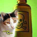 Intoxication domestique du chien et du chat : les produits toxiques industriels