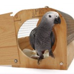 Comment organiser le voyage de notre perroquet dans de bonnes conditions ? (préparatifs)