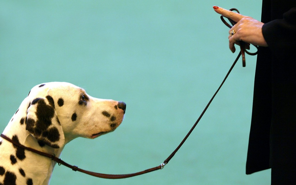 éducation-âge-limite-capacités-apprentissage-apprendre-chiens-chiots-comportements-canins-domestiques-animal-compagnie-animaux-animogen-