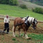 Fête de l'élevage et de la traction animale à Laujol (82), samedi 17 et dimanche 18 août 2013