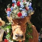 L'Animal en Fête à Saint Martin Vésubie (06), le dimanche 15 septembre 2013