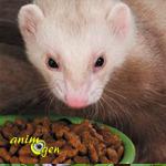 L'alimentation du furet : proies mortes, viande ou croquettes, le dilemme
