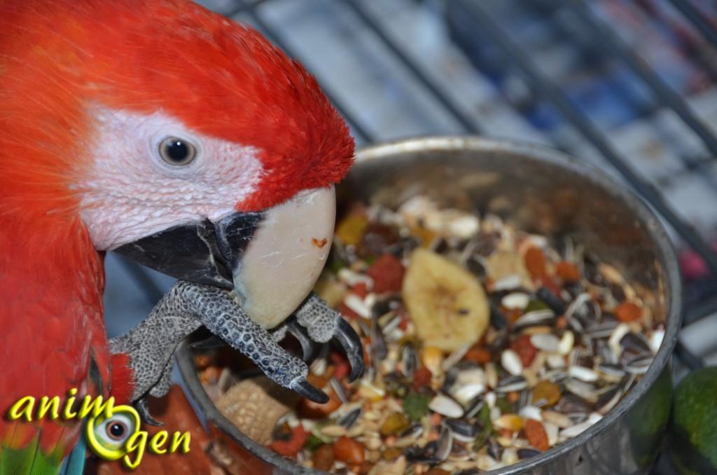 Alimentation pour perroquets : mélange de noix et fruits exotiques Tonicum (Versele Laga)