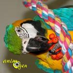 arbre-baie-sorbier-nourriture-alimentation-bois-perroquets-psittacidés-oiseaux-animal-animaux-compagnie-animogen-0