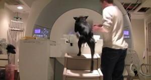 Comportement : comment le cerveau d'un chien réagit-il aux ordres de son maître ?