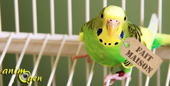 Comment choisir un perroquet lors de l'achat ?