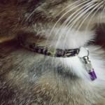 Accessoire : quel modèle de collier avec sécurité pour chat choisir ?