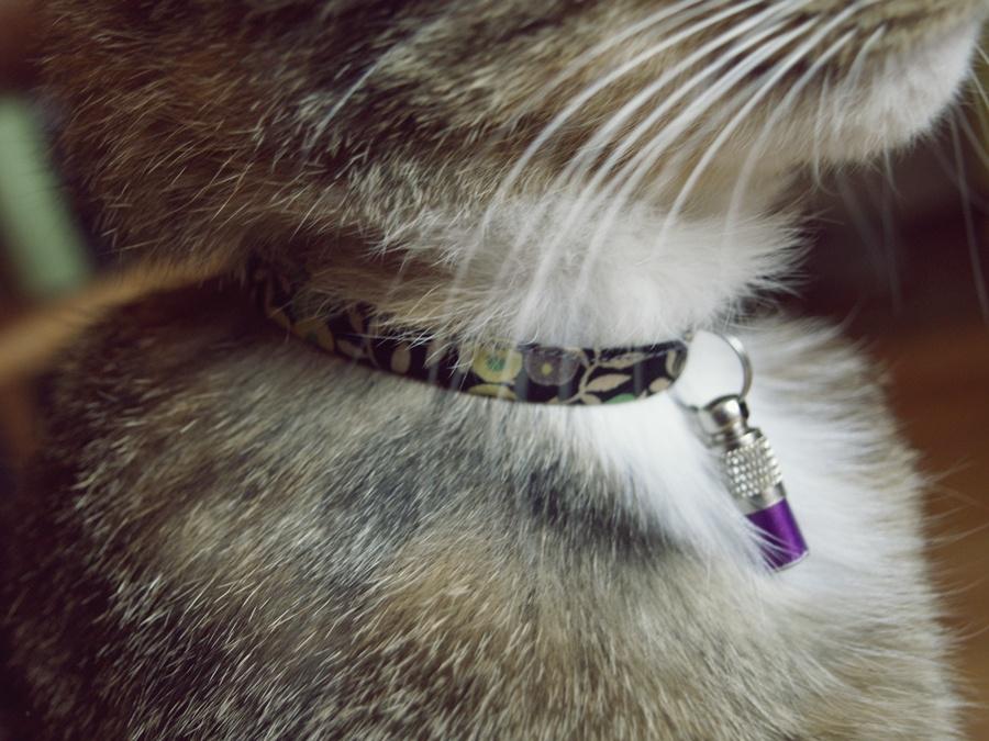 Accessoire pour chat quel mod le de collier avec for Quel compresseur choisir pour peindre
