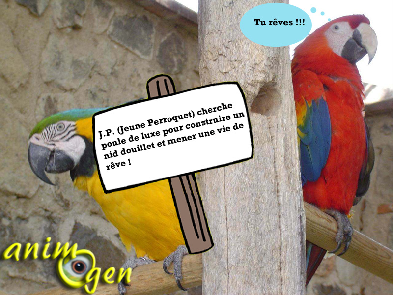 Qu'est-ce-qui fait craquer les perroquets dans le choix de leur partenaire ?