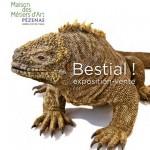 Exposition artistique animalière « Bestial » à Pézenas (34), du 01 er juin au dimanche 31 août 2013