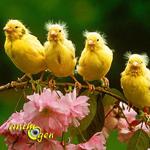 Quelles activités de foraging peut-on proposer aux canaris et oiseaux exotiques en volière ?