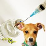 Santé : l'hépatite contagieuse canine (causes, symptômes, traitement)