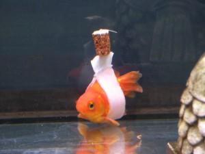 Santé : un accessoire fait maison au service du handicap des poissons