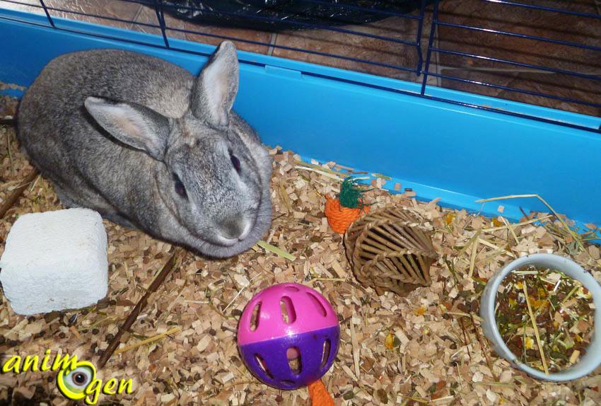 "Jouet pour lapins et rongeurs : balle de foraging ""Willow Ball"", Nature First (Happypet)"