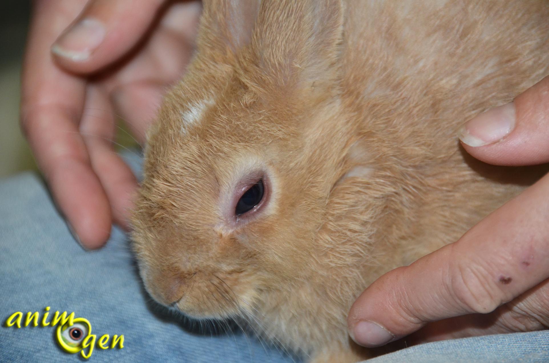 Sant la conjonctivite chez nos lapins de compagnie - Comment se debarrasser des lapins sauvages ...