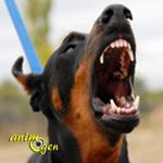 Comportement : la morsure chez le chien (causes et actions préventives)