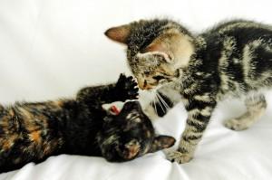 Santé et comportement : la musique est-elle relaxante pour les chats ?