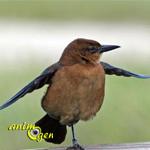 Pourquoi les oiseaux restent-ils posés sur une patte ?