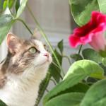 Santé : quelles sont les plantes toxiques pour nos chats ?