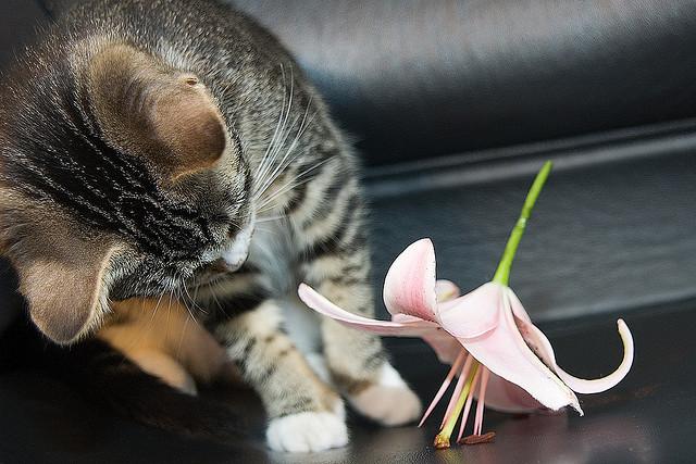 Sant quelles sont les plantes toxiques pour nos chats for Plante yucca chat